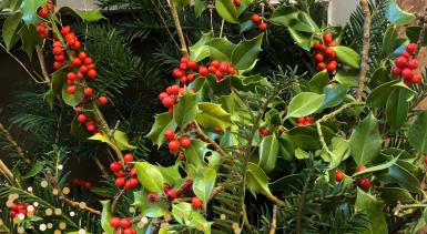Noël : une fête de l'espérance